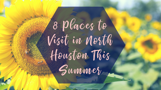 8 things to do in north houston this summer